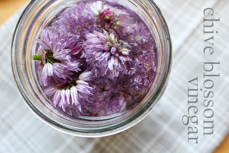 Chive Blossom Vinegar » A Full Measure of Happiness